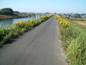 黄色い秋の野花(セイタカアワダチソウかと思います)